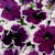 Can Can Picotee Velvet Petunia