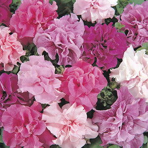 Double Cascade Mix Petunia