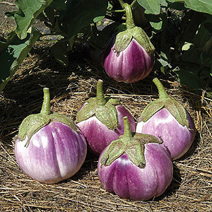 Organic Eggplant Seeds, Rosa Bianca