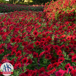 Tidal Wave® Red Velour Trailing Petunia