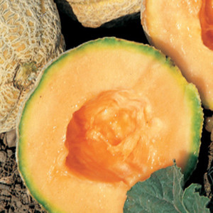 Gold Star Cantaloupe Melon