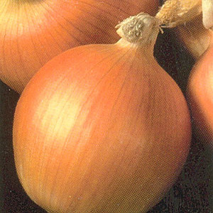 Organic Onion Sweet Valencia