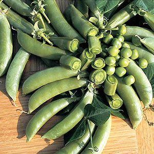 Organic Pea Seeds, Sugar Snap
