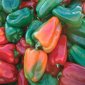 Organic Sweet Bell Pepper Seeds, California Wonder