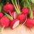Organic Radish Seeds, Cherry Belle Tali