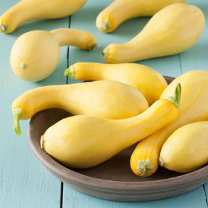 Golden Yellow Summer Crookneck Early Summer Squash