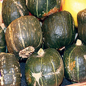 Organic Winter Squash Seeds, Buttercup (Burgess Strain)