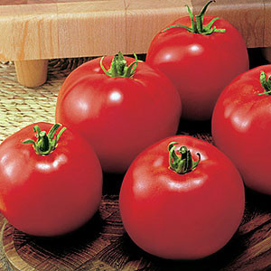 Organic Tomato Moneymaker