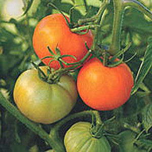 Organic Tomato Nebraska Wedding