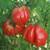 Organic Tomato Zapotec Pleated-OP