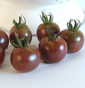 Organic Tomato Black Cherry-OP
