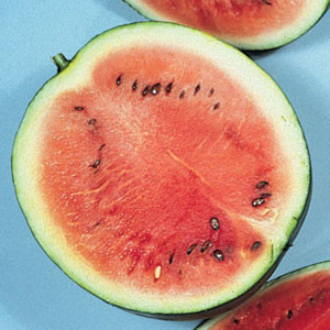 Organic Watermelon Seeds, Sugar Baby