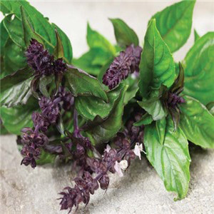 HERB BASIL LICORICE