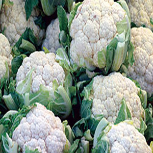 CAULIFLOWER SELF BLANCHE