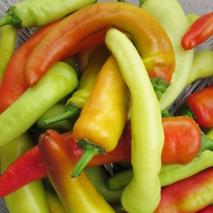 PEPPER HUNGARIAN YELLOW F1 HOT WAX