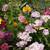Butterfly Flower Wildflower Seed