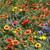 Dry Location Wildflower
