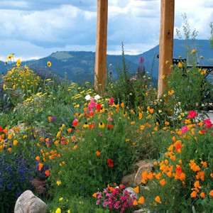 Firewise Wildflower Seed Mix