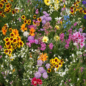 Golf Course Wildflower Seed Mix