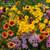 Knee-Hi Wildflower Seed Mix