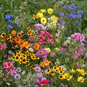 Low Growing Wildflower
