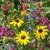 Moist Location Wildflower