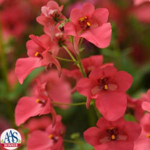 Coral Rose Diamonte Diascia
