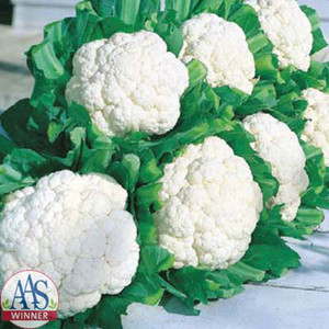 Snow Crown Cauliflower