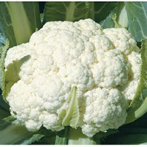 Skywalker Organic Cauliflower