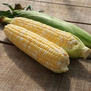 Xtra-Tender F1 Bi-Color Sweet Corn- 274A