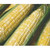 Peaches & Cream Bi-Color Sweet Corn