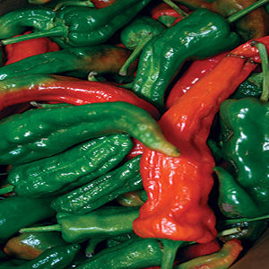 Anaheim TMR 23 Chili Pepper