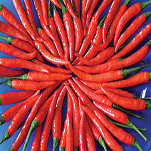 Cayenne Hot Long Red Chili Pepper