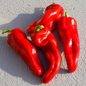 Cayenne Espana Hot Chili Pepper