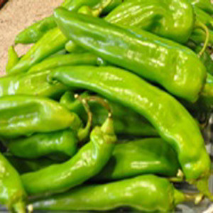 Hatch New Mexico Green Chile Pepper