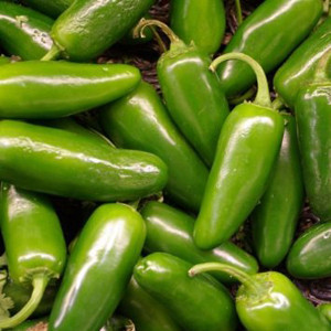 Chichimeca Jalapeno Chile Hot Pepper