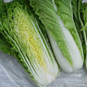 Michihili Chinese Cabbage