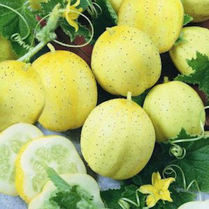 Lemon Cucumber Seeds