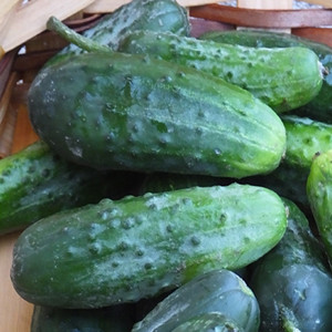 Eureka Slicing/Pickling Cucumber