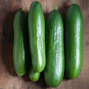 Diva Cucumber