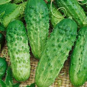 Country Fair Pickle Cucumber