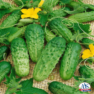 Pick A Bushel Pickle Cucumber
