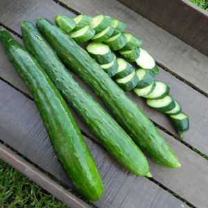 Tasty Green Cucumber