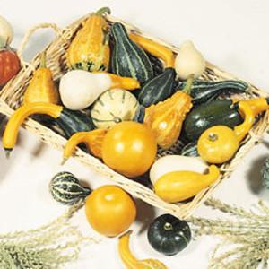 Little Mix Gourd