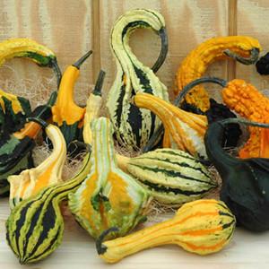 Autumn Wings Blend Gourd