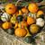 Small Formula Blend Gourd