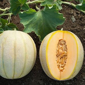 Halona Cantaloupe Melon