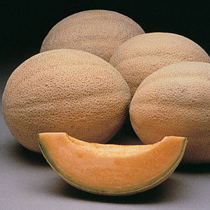 Athena Cantaloupe Melon