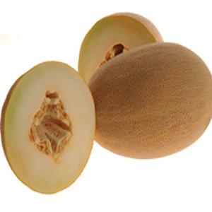Merlin Honeydew Melon