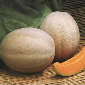 Aphrodite Cantaloupe Melon